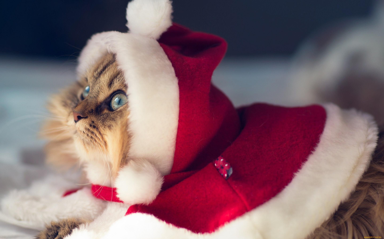 Фото кота в новый год